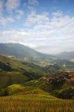 krajobrazu taras Zdjęcie Stock