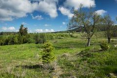 krajobrazu wiejskiego Obrazy Royalty Free