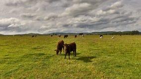 krajobrazu wiejskiego Pole i trawa Obrazy Stock