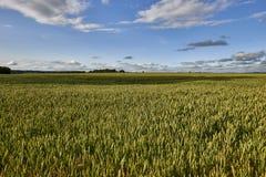 krajobrazu wiejskiego Pole i trawa Obrazy Royalty Free