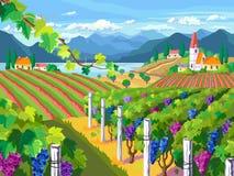 krajobrazu wiejskiego Winnicy i winogron wiązki ilustracja wektor