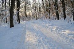 krajobrazu zakrywający śnieg Obrazy Stock
