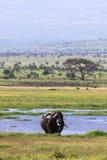 Krajobrazy Amboseli Kenja, Kenja Obraz Stock