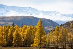 Krajobrazy góry przy jesienią, Altai republika Zdjęcia Stock