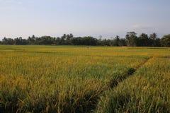 Krajobrazy między Wonosobo i Borobudur zdjęcie stock