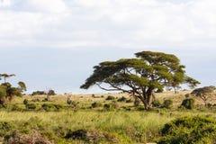 Krajobrazy sawanna Amboseli Kenja, Afryka Fotografia Royalty Free