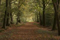 Krajobrazy w holandiach, holenderów krajobrazy obraz stock