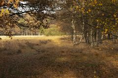 Krajobrazy w holandiach, holenderów krajobrazy zdjęcia stock