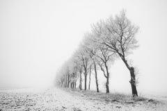 Krajobrazy w holandiach, holenderów krajobrazy zdjęcia royalty free