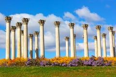 Krajowego Capitol kolumny w ranku Obraz Royalty Free