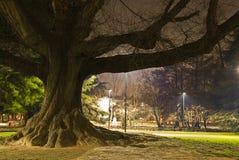 krajowy dębowy stary park Zdjęcia Stock