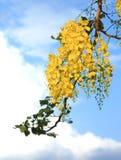 Krajowy drzewo Tajlandia Złotej prysznic drzewa sztuki druk Zdjęcia Stock