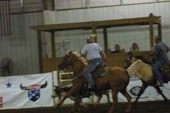 Krajowy Equestrian centrum 2016 zdjęcie royalty free
