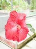 Krajowy kwiat Fotografia Stock