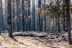 Krajowy zatoczka kompleksu ogień Fotografia Royalty Free