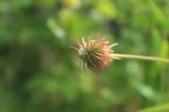 kraju angielski kwiatów ogród zdjęcia stock