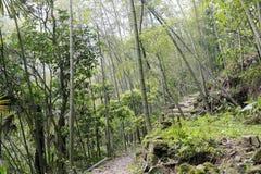 Kraju bambusa las Zdjęcie Stock