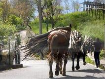 Kraju boczny koń Zdjęcia Stock
