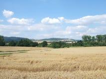 kraju dzień krajobrazu tęczy lato słonecznik zdjęcia royalty free