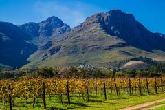 kraju gór dolinny wino Fotografia Royalty Free