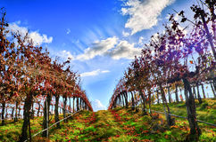 kraju gór dolinny wino Obrazy Royalty Free
