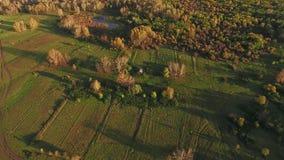 Kraju krajobraz: tylko natura, rośliny, flory widok z lotu ptaka zbiory wideo