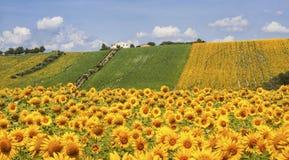 Kraju krajobraz w marszach (Włochy) Fotografia Stock