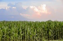 Kraju Kukurydzanego pola Rolny biznes fotografia stock