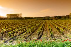 kraju Languedoc wino Obrazy Royalty Free
