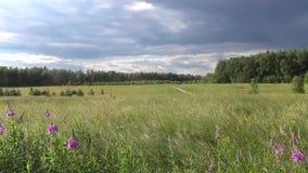 Kraju lata Rosyjski krajobraz zdjęcie wideo