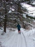 kraju narciarstwo przecinający lasowy Obrazy Royalty Free