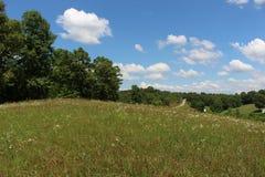 Kraju pole z stokrotkami Fotografia Stock