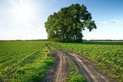 kraju poly zielona droga Fotografia Royalty Free