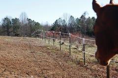 Kraju ranka koń ogląda innych konie jedzie Obraz Stock