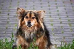 kraju szczekliwy pies domowy Kazakhstan Obrazy Stock