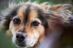 kraju szczekliwy pies domowy Kazakhstan Obraz Stock