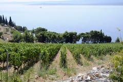 kraju winniców wino Zdjęcie Stock