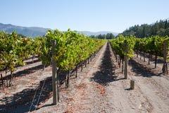 kraju wino zdjęcie stock