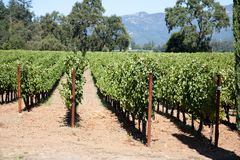 kraju wino obraz royalty free