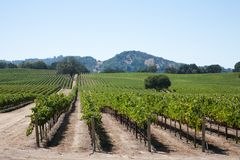 kraju wino Obrazy Stock