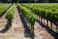 kraju wino Zdjęcie Royalty Free