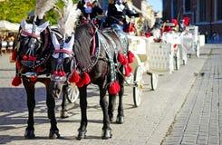 Krakau-Pferde Lizenzfreie Stockfotos