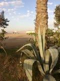Krake in der Wüste Lizenzfreies Stockfoto