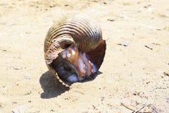 Krake in einer anderen Wanne im Sand Stockfotos