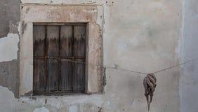 Krake am Fenster Stockfotografie