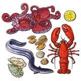 Krakenhummeraalmiesmuschelaustern-Meeresfrüchtesammlung Lizenzfreie Stockbilder