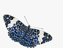krakers błękitny motylia wycinanka Zdjęcie Stock