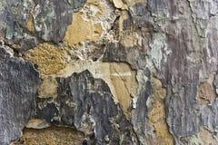 krakingowa ściany Fotografia Stock