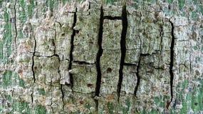 Krakingowa barkentyna z jasną teksturą fotografia royalty free