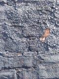 Krakingowa farba przy przylądka punktem obserwacyjnym Fotografia Stock
